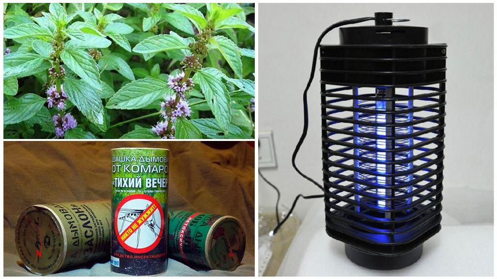 Verschillende manieren om met insecten om te gaan