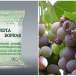 Boorzuur van wespen in de wijngaard