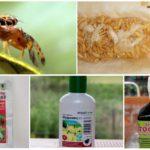 Chemicaliën om meloenvliegen te bestrijden