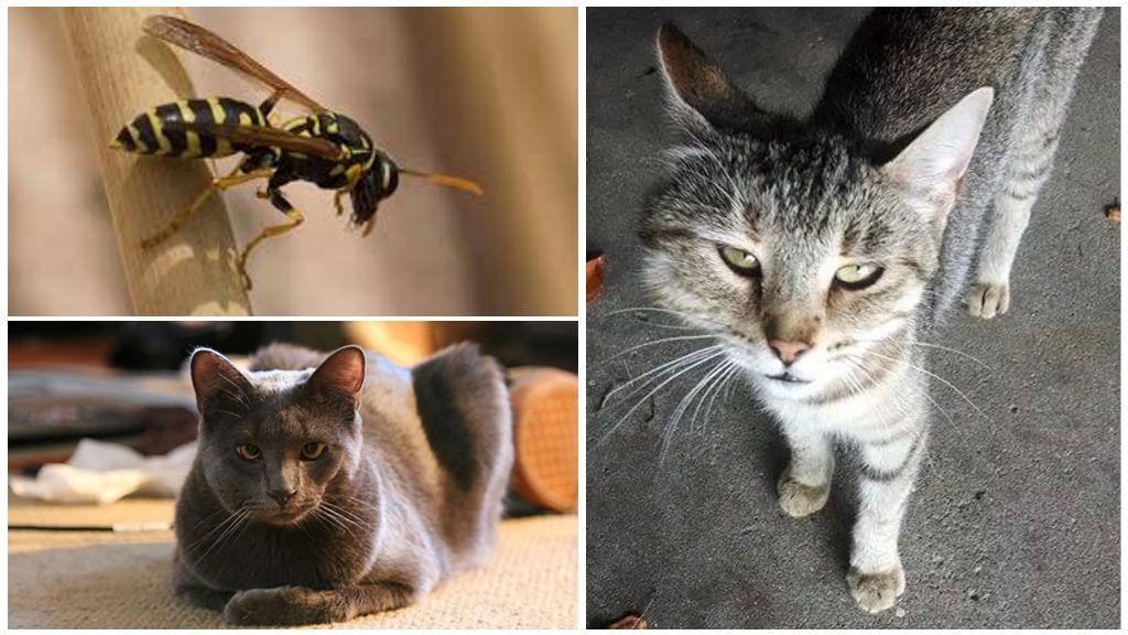 Cat bijt wesp