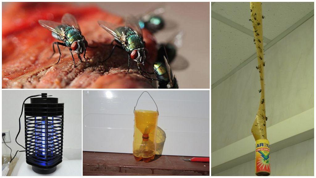 Mechanische methoden om insecten te bestrijden