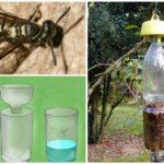 Wespenvanger uit plastic fles