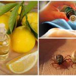 Essentiële oliën tegen teken
