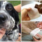 Dog Wasp Bite Behandeling