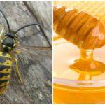 Wespen en honing