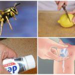 Folkmedicijn voor insectenbeten