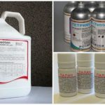 Wasp Control Chemicals