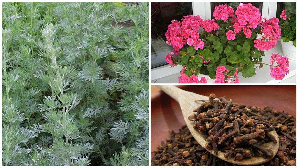 Vliegen afwerende planten
