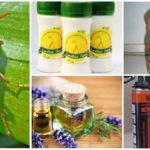 Volksrecepten voor het bestrijden van wespen