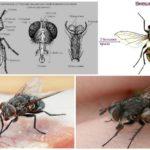 De structuur van de vlieg