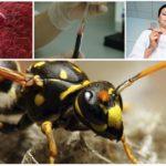 Brazilian Wasp Poison
