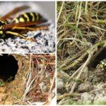 Aarden Wespen
