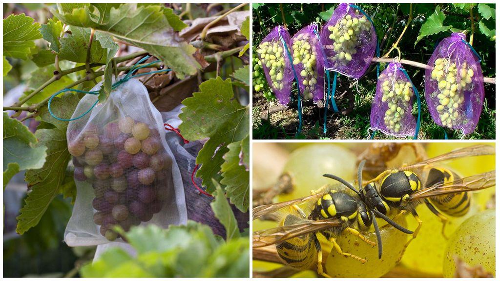 Zakken wespen voor druiven