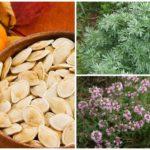 Folkmedicijn voor pinwormen bij volwassenen