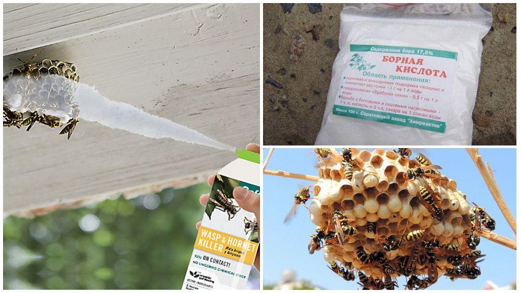 Remedies tegen wespen