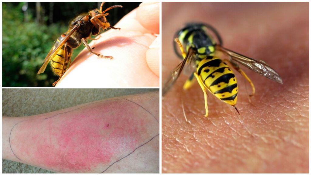 Wasp steek gevaar