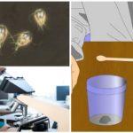 Tests voor de aanwezigheid van Giardia