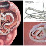 runderen lintworm