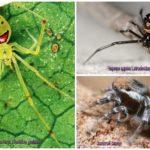 De mooiste spinnen ter wereld