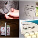 Behandeling van Ascariasis bij katten